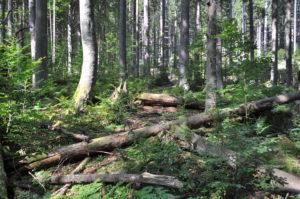 boubínský prales